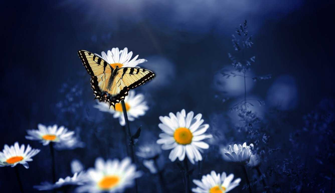 Butterfly On Flowers, Butterfly, Flowers, Hd, Photography,popular - Das Leben Hat Keinen Rückwärtsgang Spruch , HD Wallpaper & Backgrounds