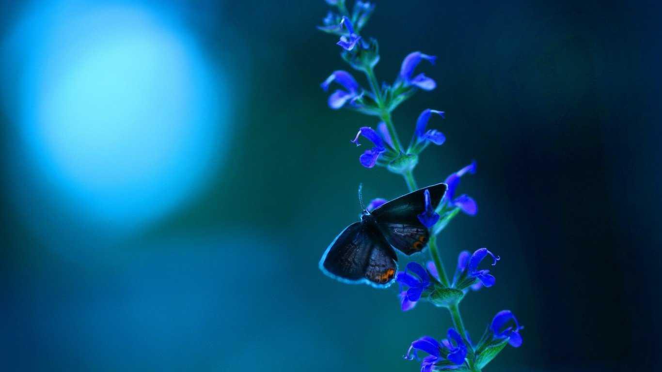 Butterfly Blue Flowers, Butterfly, Flowers, Plants, - Flower Ultra Hd Desktop Wallpaper Hd , HD Wallpaper & Backgrounds