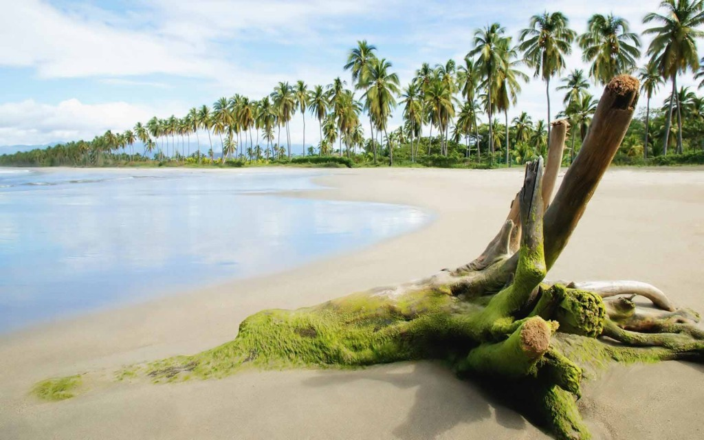 New Post Has Been Published On Http - Beach With Coconut Trees , HD Wallpaper & Backgrounds