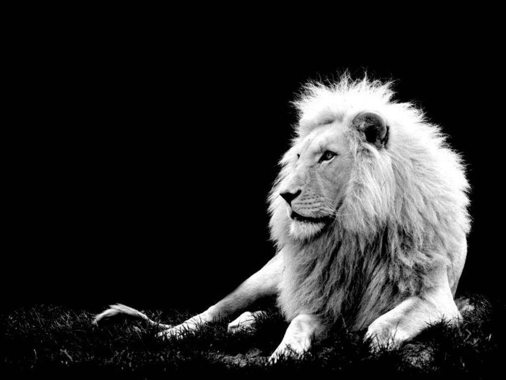 Most Powerful Lions In World - Lion Doesn T Have To Roar , HD Wallpaper & Backgrounds