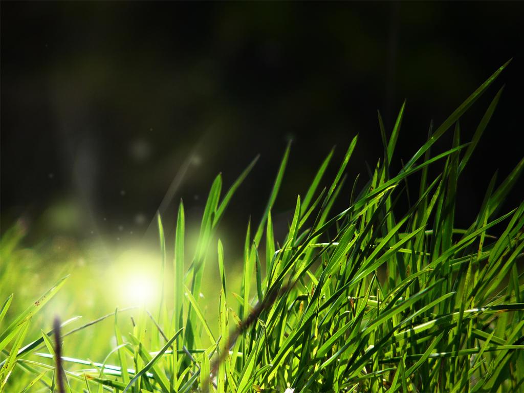 Grass Background - 1400 X 900 Hd , HD Wallpaper & Backgrounds