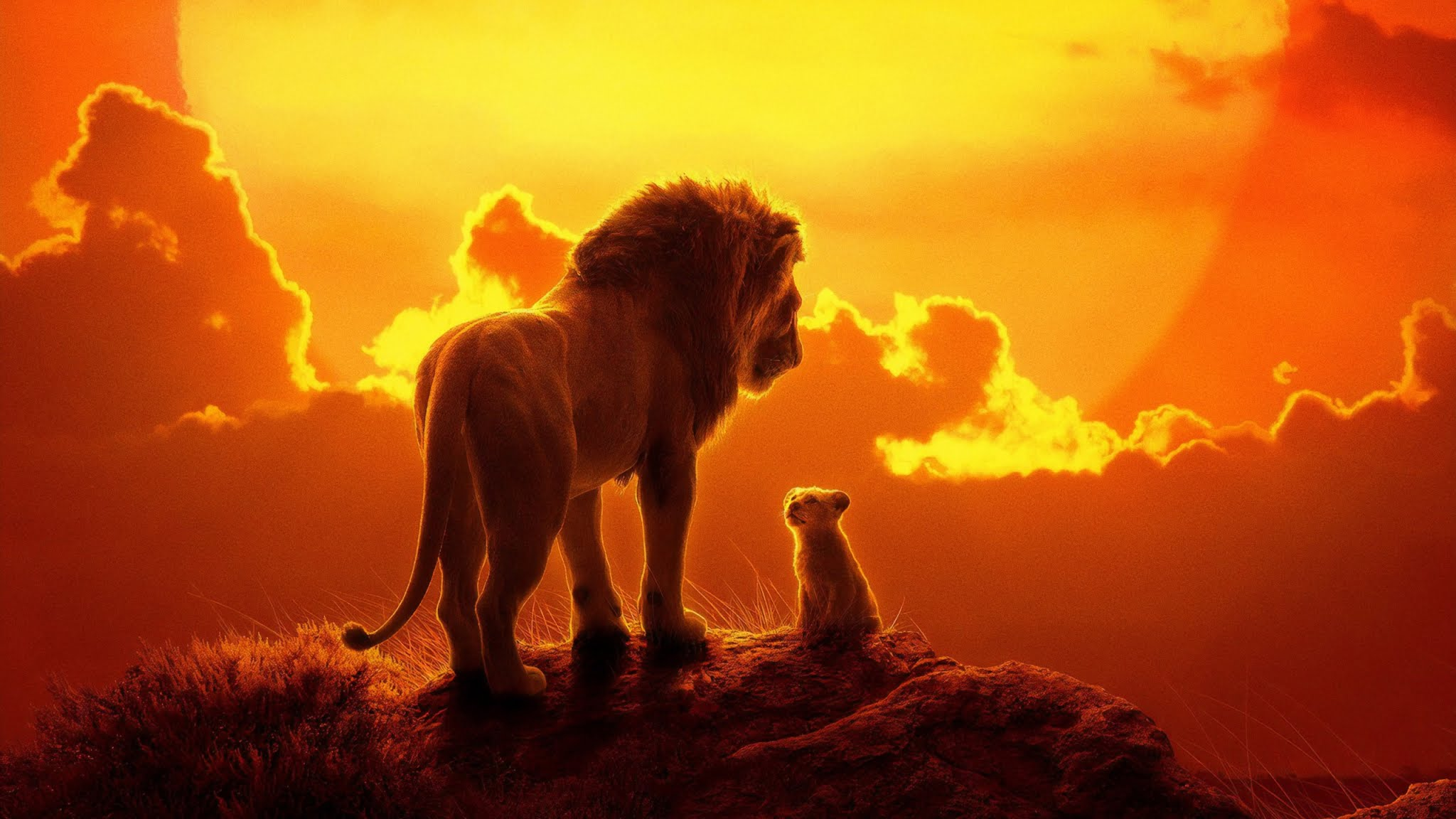 The Lion King - Mufasa And Simba 2019 , HD Wallpaper & Backgrounds
