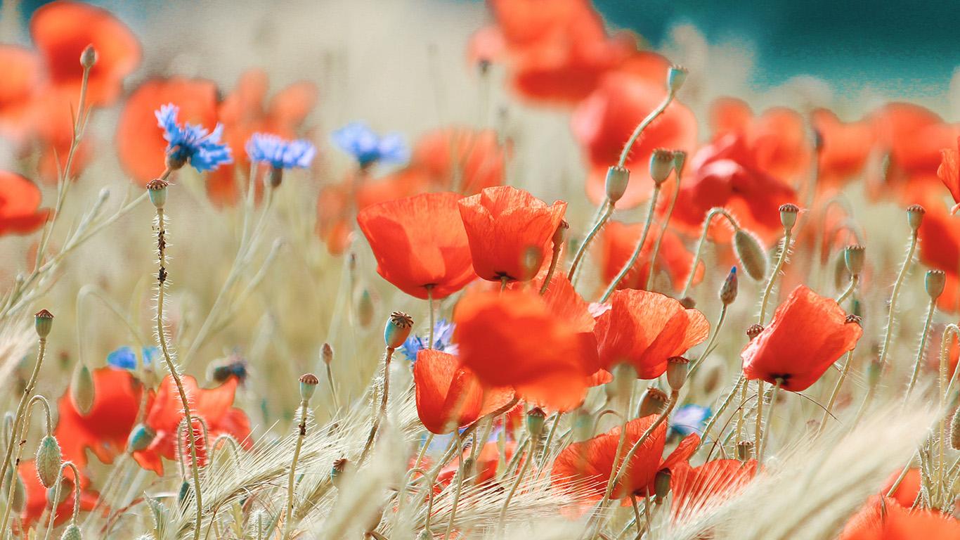 Nature Flower Good Morning , HD Wallpaper & Backgrounds