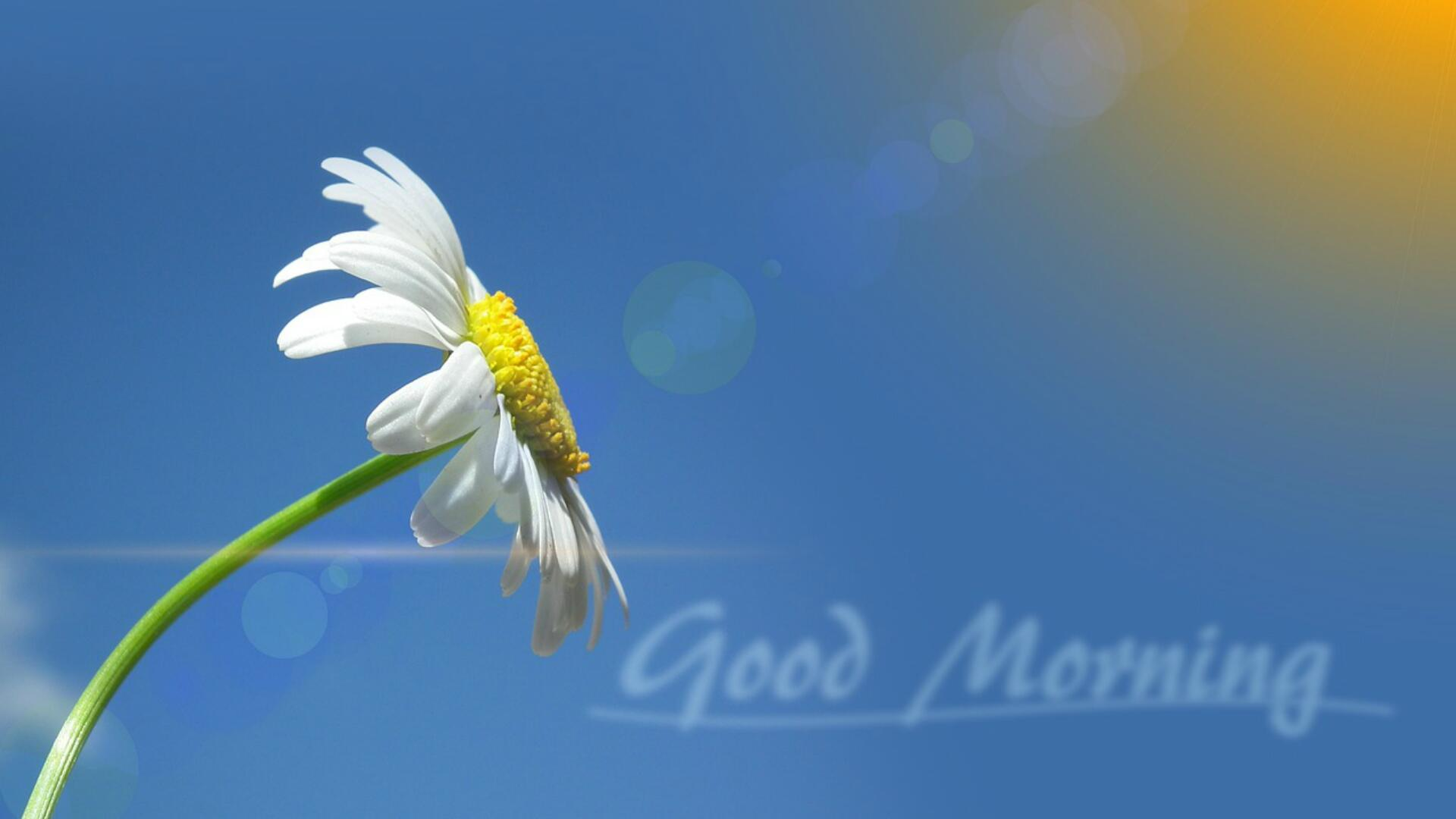Sadhguru Good Morning Quotes , HD Wallpaper & Backgrounds