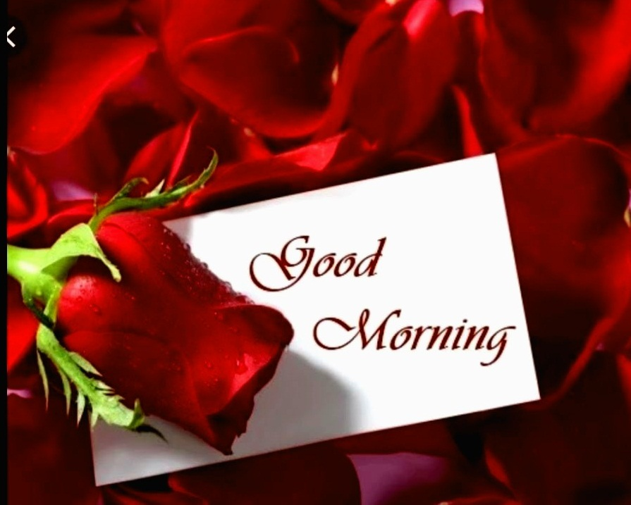Good Morning Hd Pictures Love Romantic True Love Good Morning Message 3214963 Hd Wallpaper Backgrounds Download