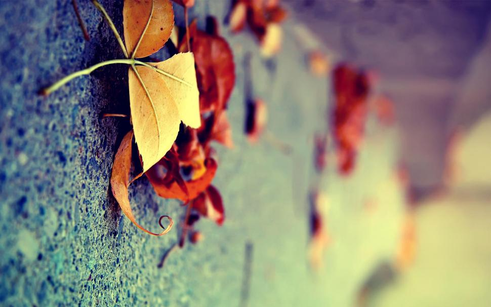 Very Beautiful Wallpaper,cool Hd Wallpaper,nice Hd - Dry Leaf On Road , HD Wallpaper & Backgrounds