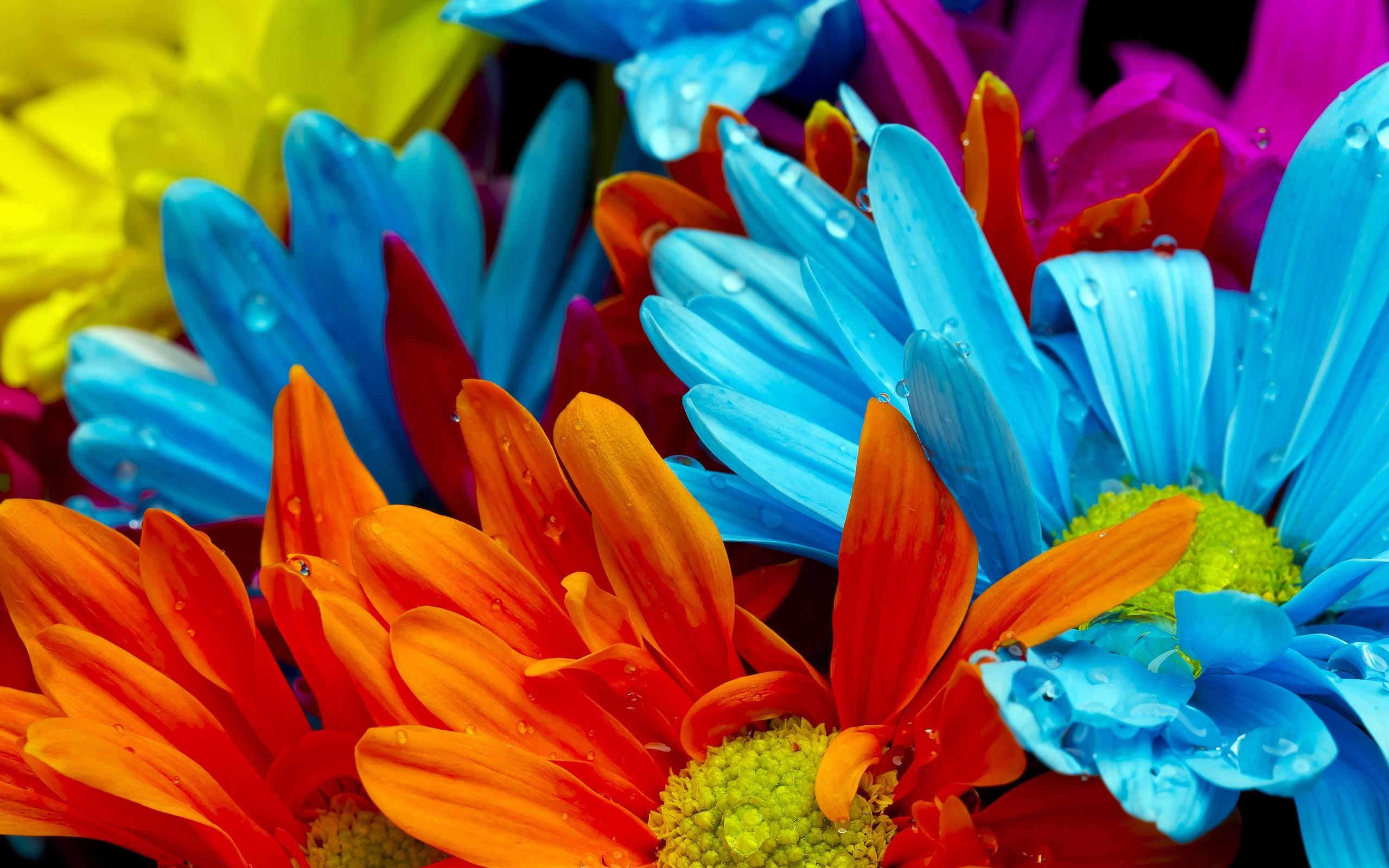Colorful Flower Wallpaper   Src Amazing Colorful Flower - Colorful Flower Background , HD Wallpaper & Backgrounds