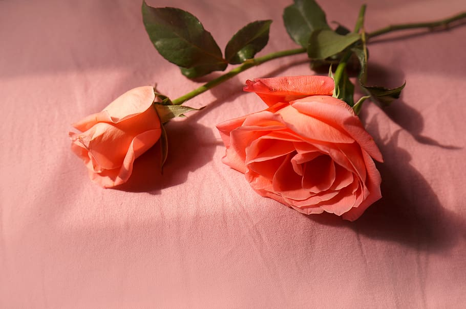 Natural, Roses, Love, Flower Buds, Plant, Rose - Natural Flowers Of Love , HD Wallpaper & Backgrounds
