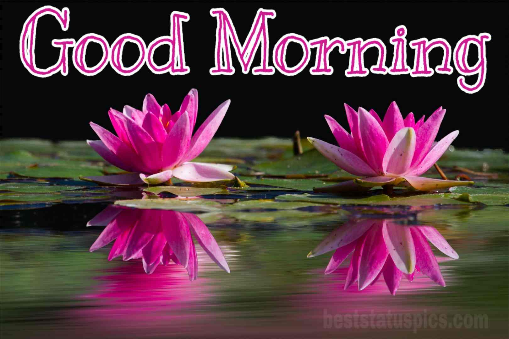New Good Morning Lotus Flower Hd New Good Morning Images Hd 3224502 Hd Wallpaper Backgrounds Download