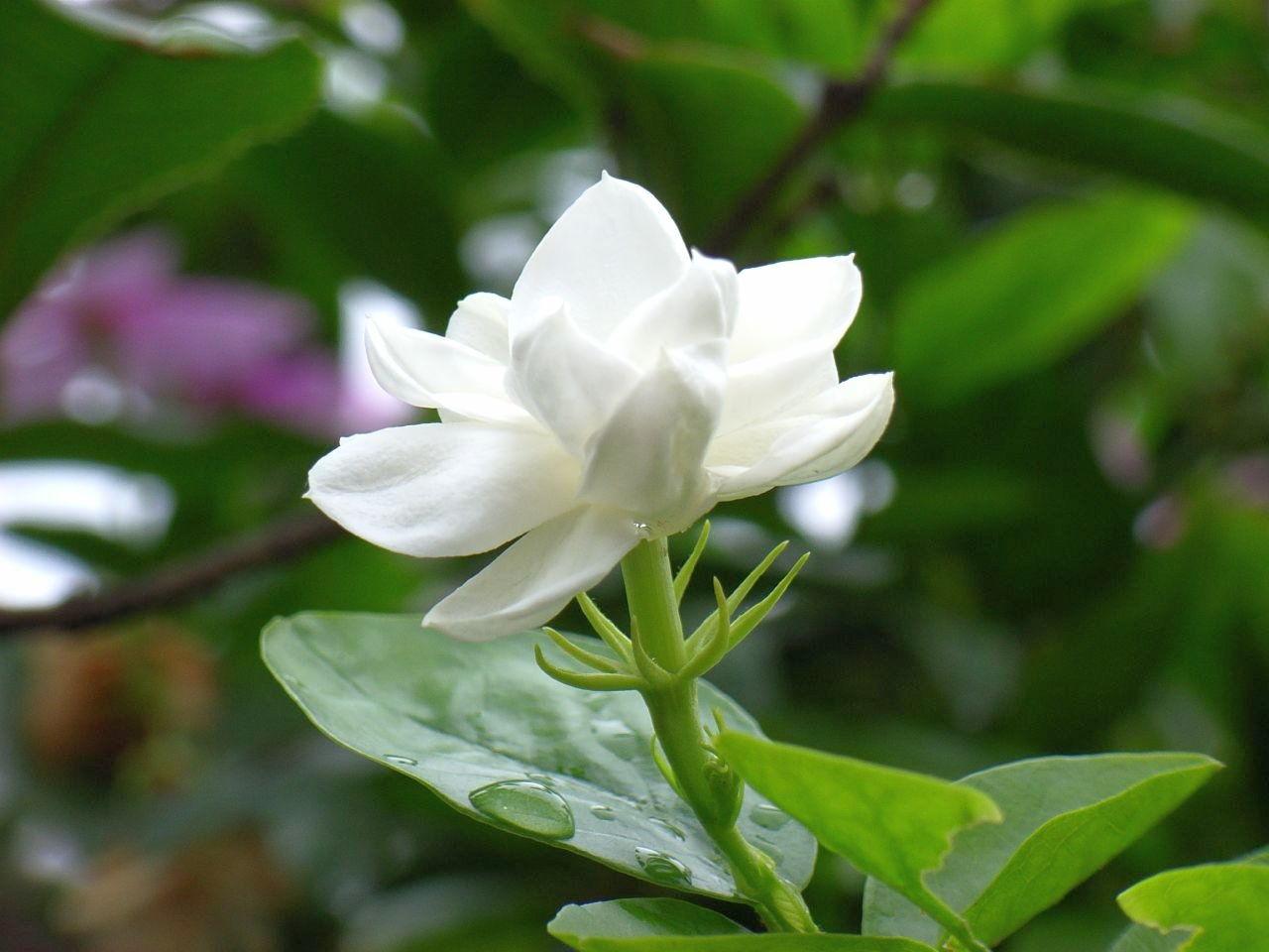 Natural Flower Image Downloading , HD Wallpaper & Backgrounds