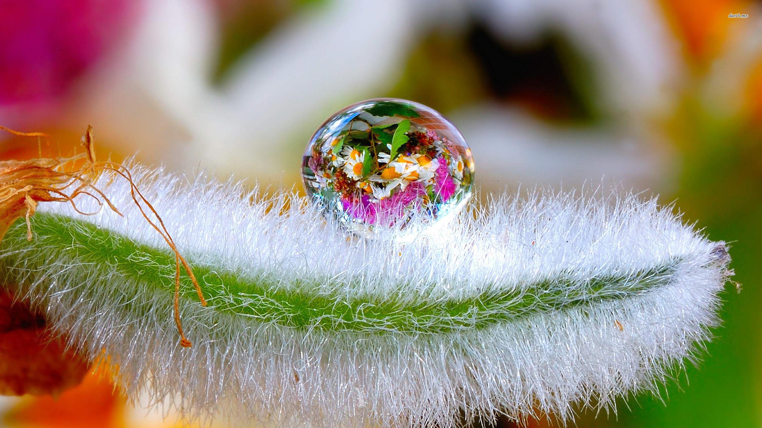 2560x1440, Flowers In A Water Drop Wallpaper   Data - Flower Water Drops Wallpaper Hd , HD Wallpaper & Backgrounds