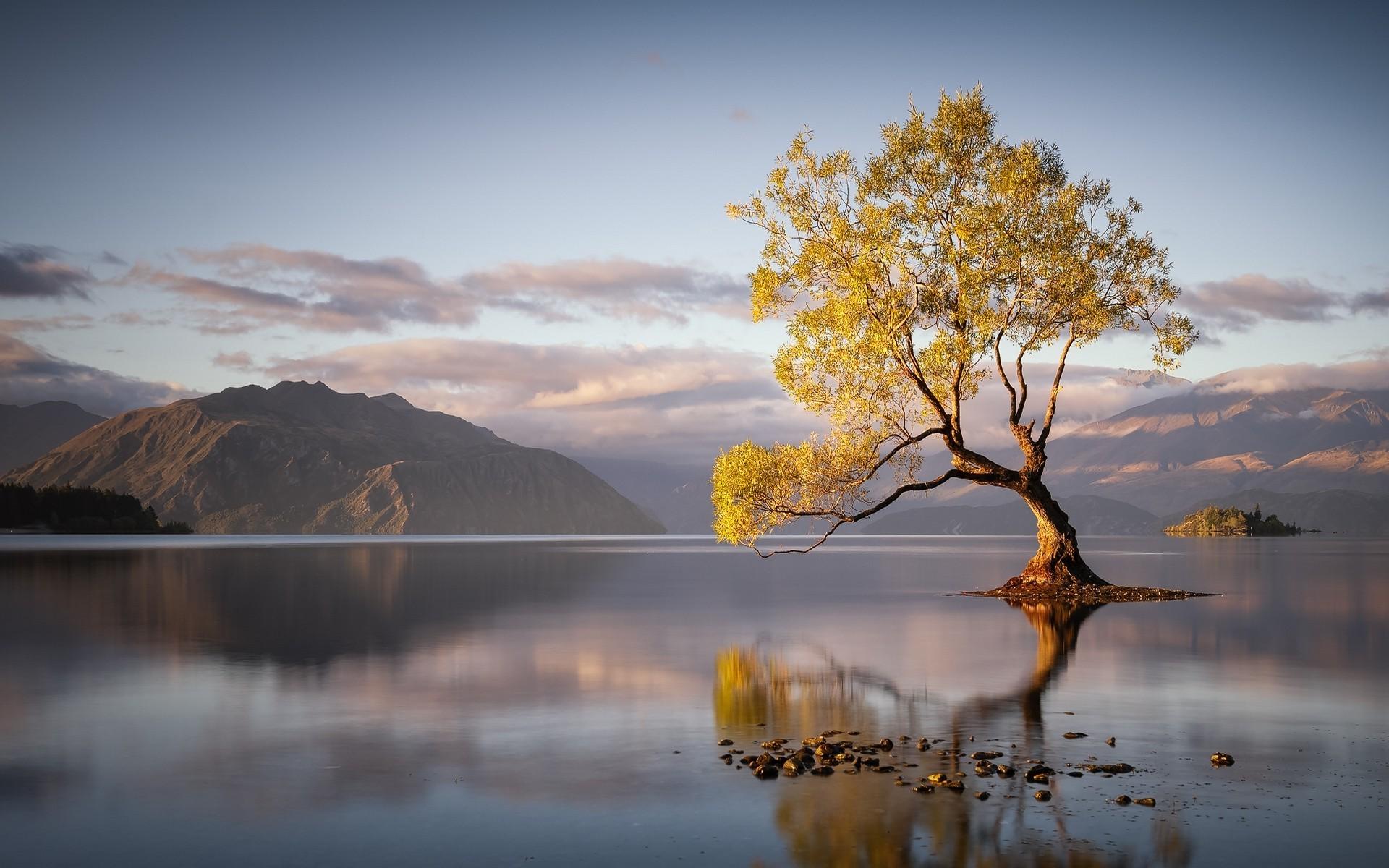 1920x1200, Landscape, Nature, Sunrise, Lake, Trees, - Lake Reflection , HD Wallpaper & Backgrounds