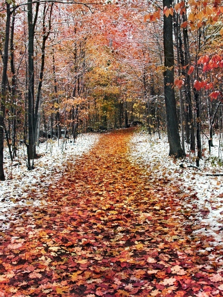 Autumn Path Trees & Snow - Late Autumn Early Winter , HD Wallpaper & Backgrounds