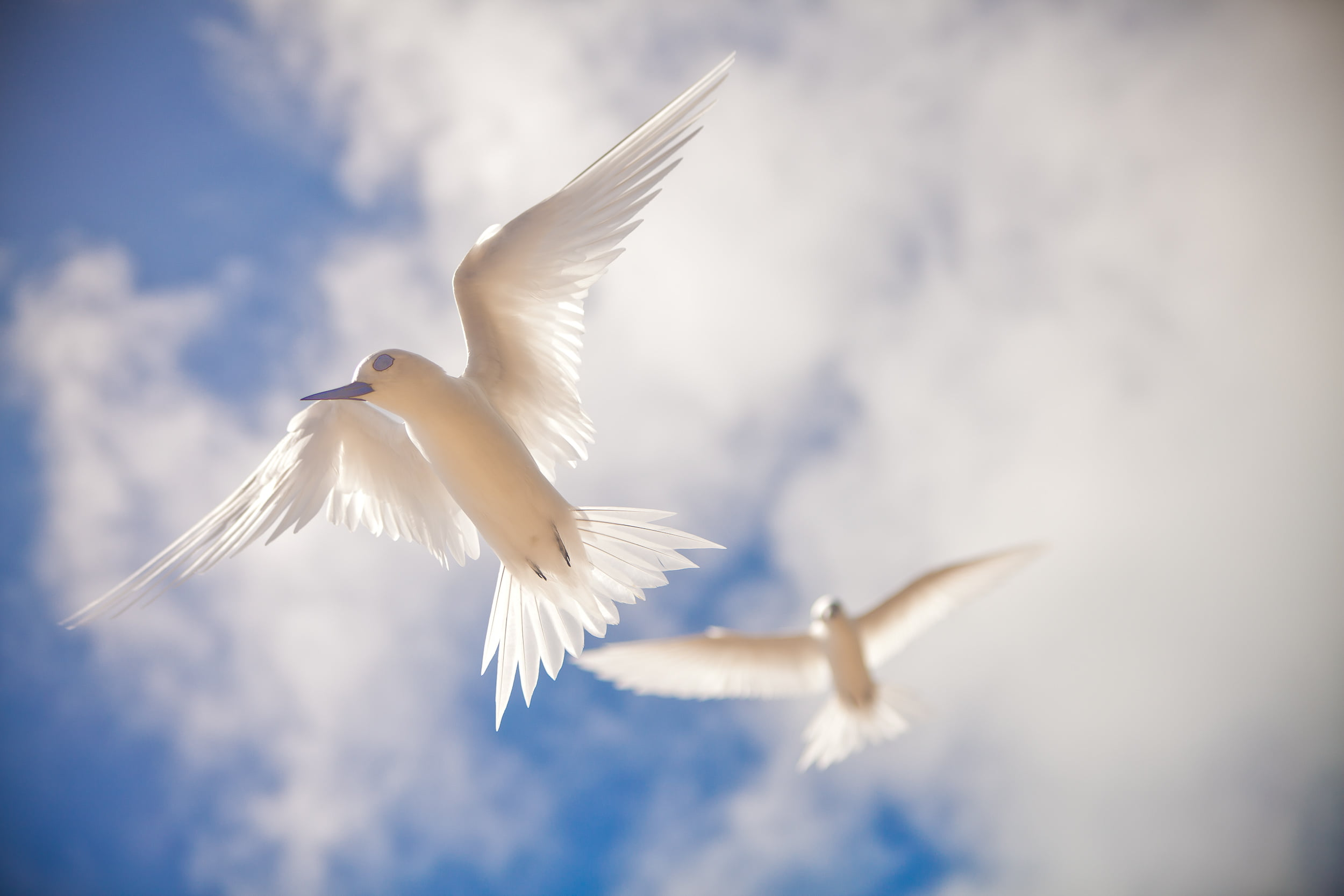 White Birds Flying In The Sky , HD Wallpaper & Backgrounds