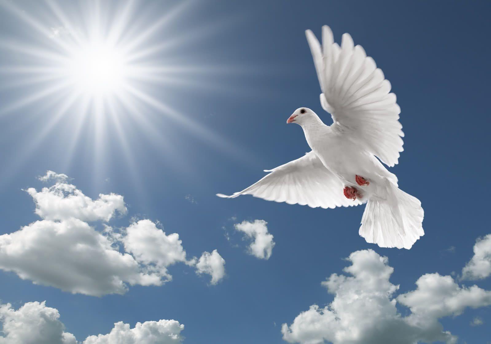 Flying Birds Wallpapers Hd Wallpapers N Birds Dove - Flying Birds Images Download , HD Wallpaper & Backgrounds