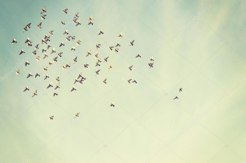 Flying Birds In Blue Sky Stock Photo - Flying Birds , HD Wallpaper & Backgrounds