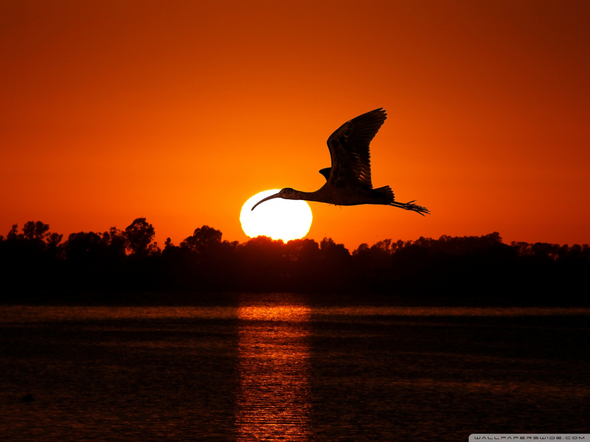 Flying Birds , HD Wallpaper & Backgrounds