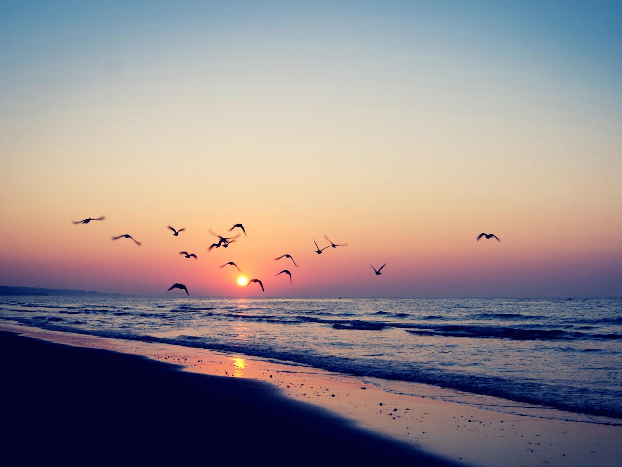 Click To Free Download The Wallpaper Flying Birds Landscape, - Fondo De Pantalla Sunset , HD Wallpaper & Backgrounds