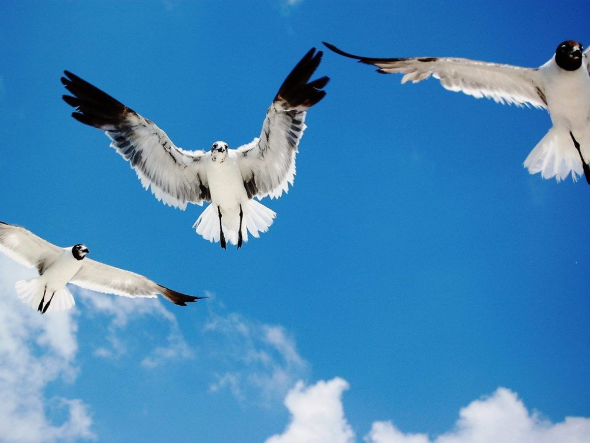 Birds Flying In The Sky , HD Wallpaper & Backgrounds
