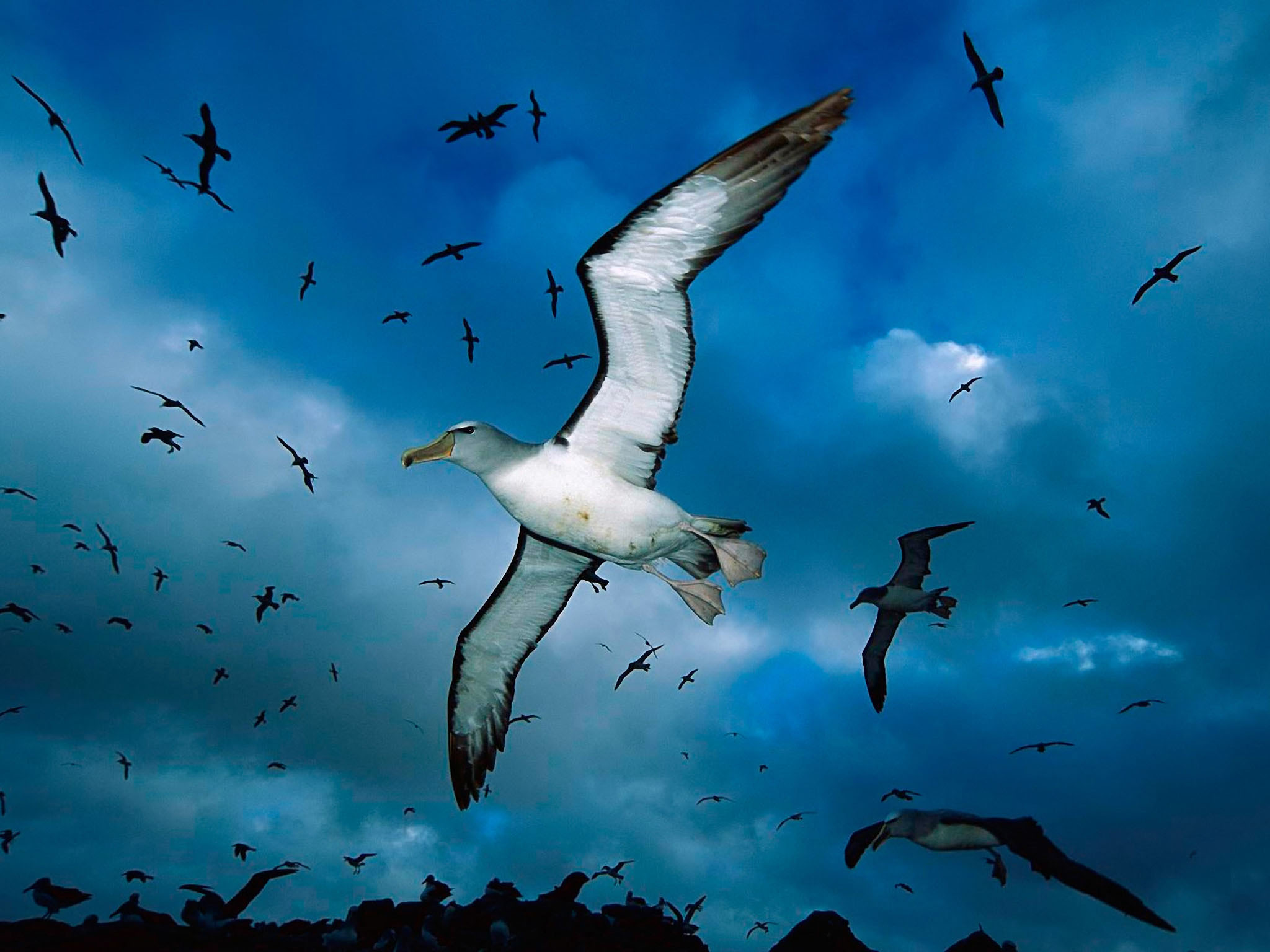 Flying Birds Apple Animals Blue Sky Hd Wallpaper - Flying Animals In The Sky , HD Wallpaper & Backgrounds