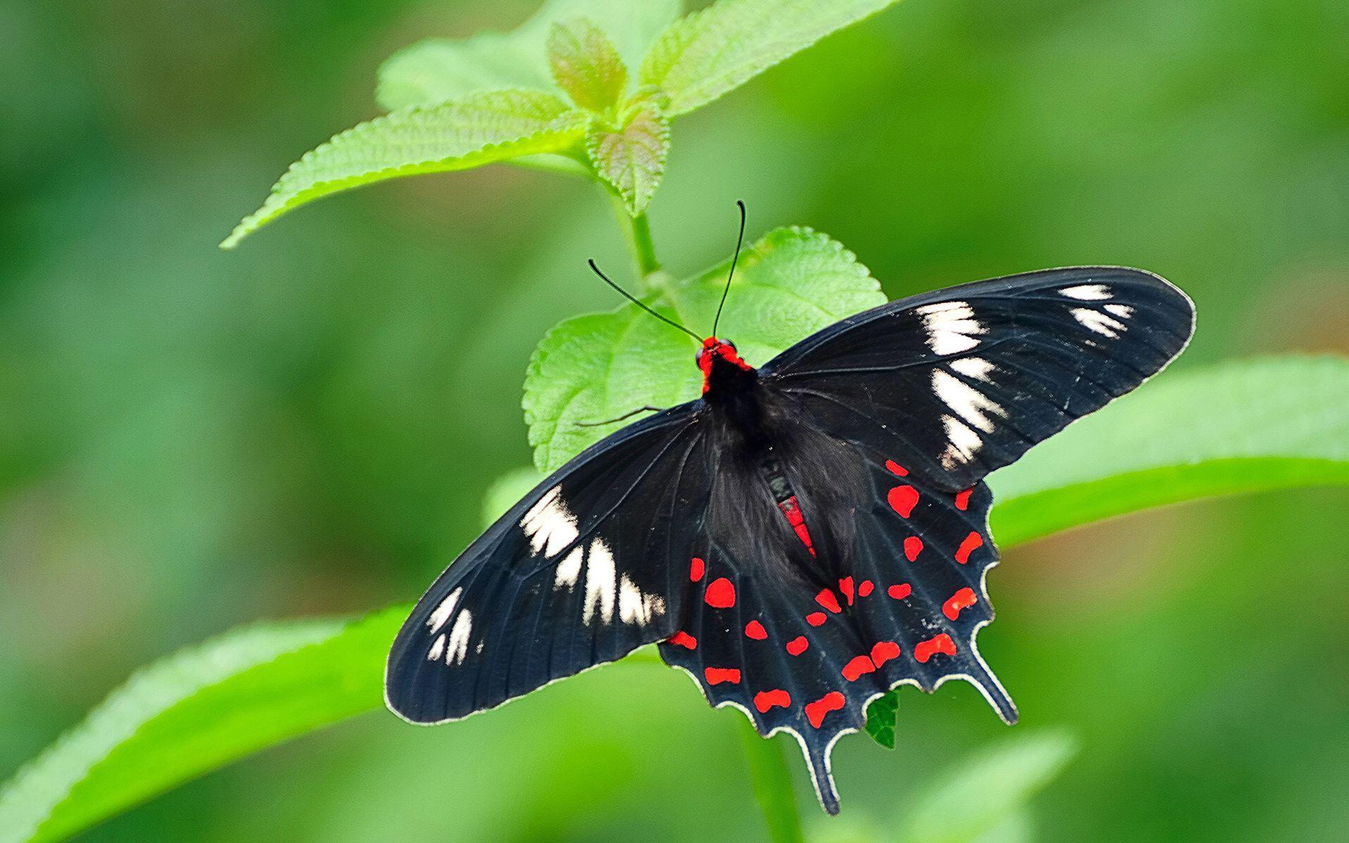Butterfly In Karnataka , HD Wallpaper & Backgrounds