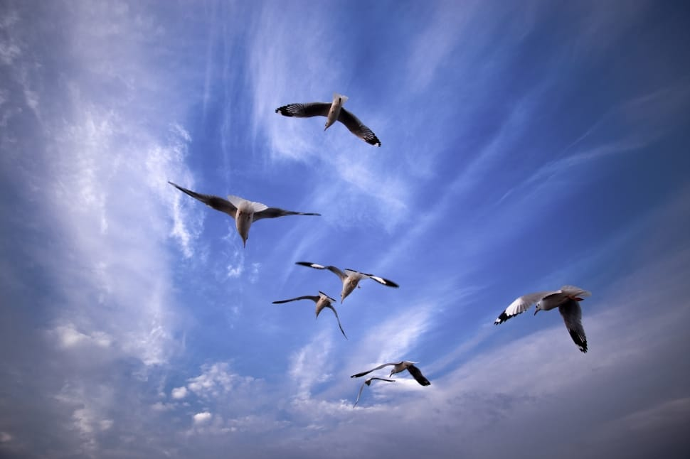 Seven Black And White Flying Birds Preview - White Flying Bird , HD Wallpaper & Backgrounds