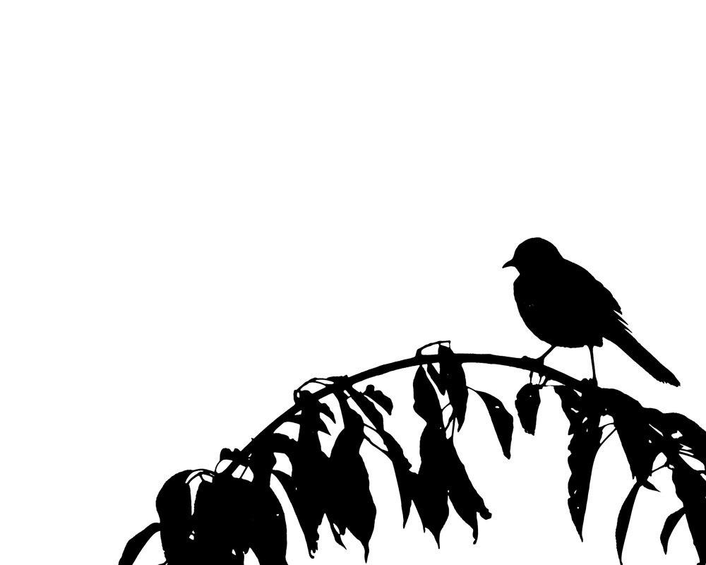 Flying Bird Photo Albumflying Bird Wallpaper Flying - Flying Bird Wallpaper Black And White , HD Wallpaper & Backgrounds