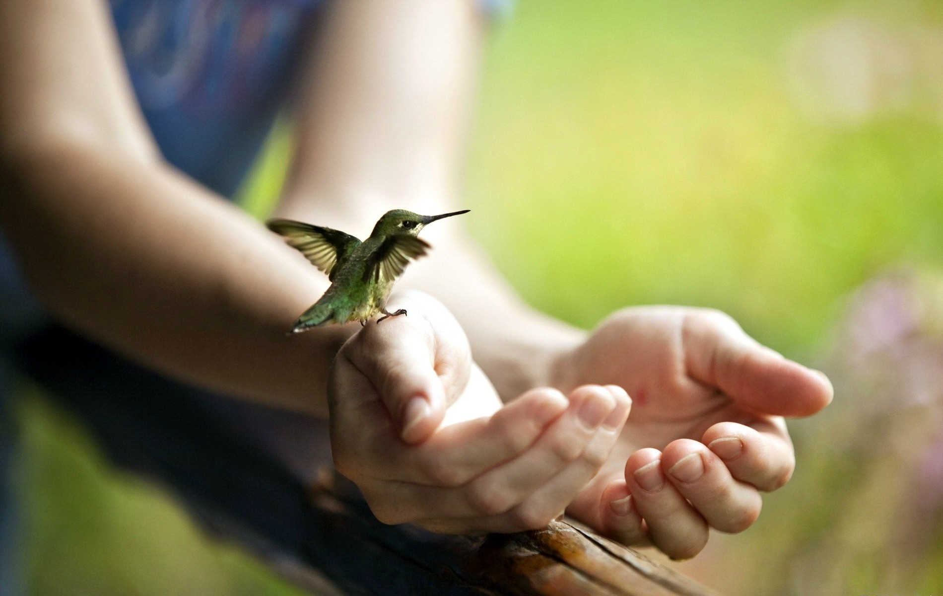 Birds Flying From Hands , HD Wallpaper & Backgrounds