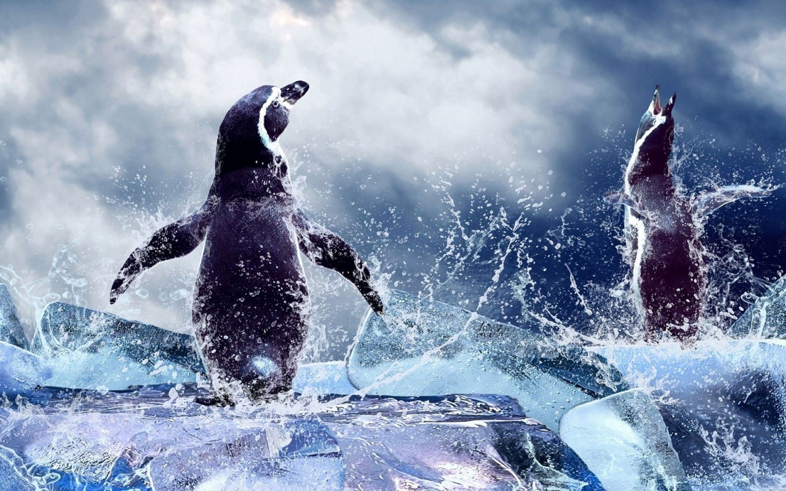 High Resolution Hd Penguin , HD Wallpaper & Backgrounds