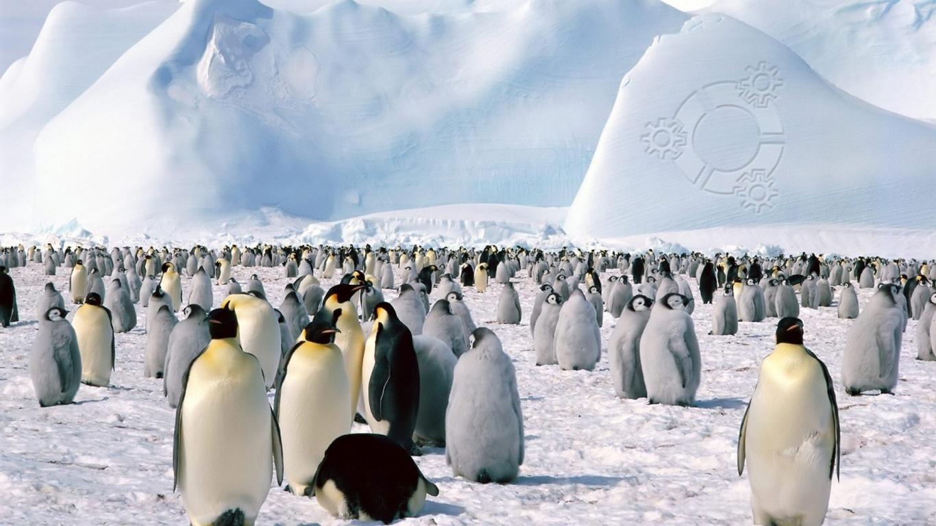 Penguins In Antarctica Background , HD Wallpaper & Backgrounds