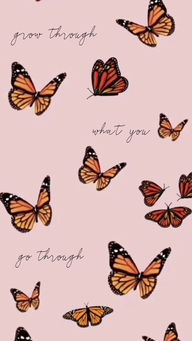 Butterfly Vsco Wallpaper - Aesthetic Profile Pictures For ...
