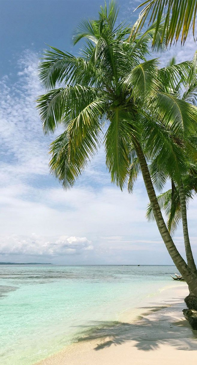 Coconut Tree On The Beach Iphone Wallpaper - Coconut Tree Wallpaper Iphone , HD Wallpaper & Backgrounds