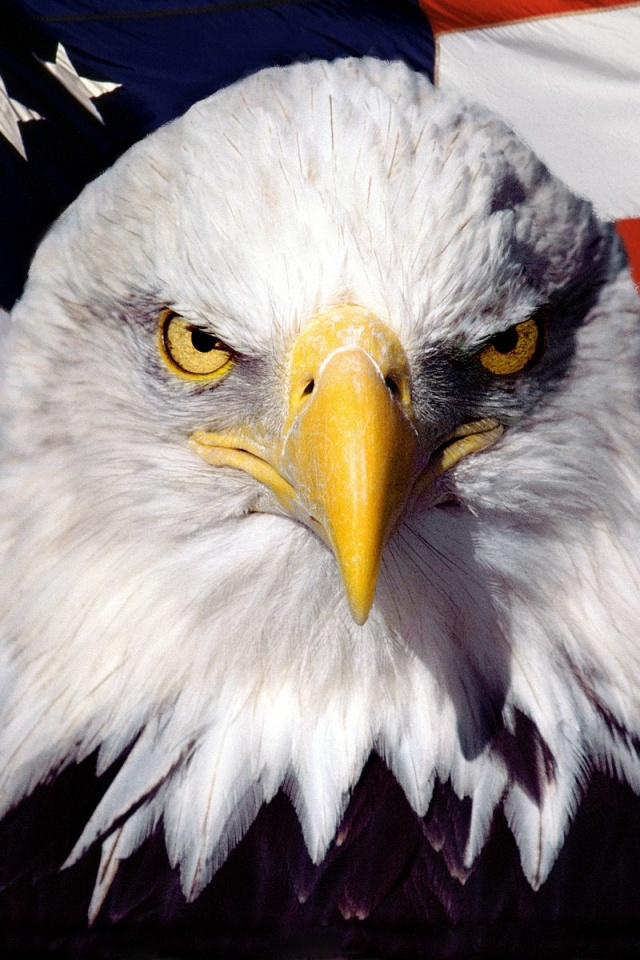Bald Eagle Wallpaper Iphone 3276152 Hd Wallpaper Backgrounds Download