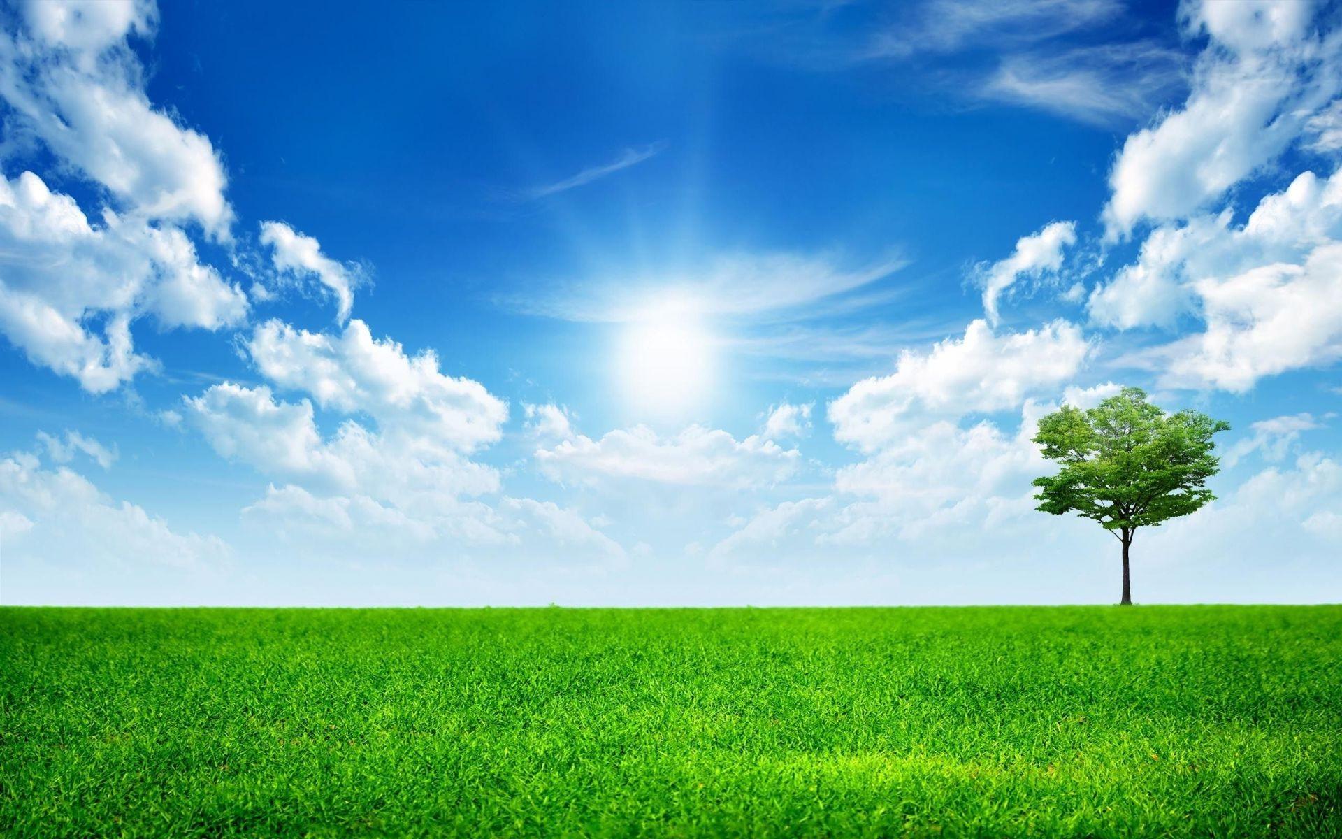Landscapes Grass Field Sun Rural Hayfield Fair Weather - Green Nature , HD Wallpaper & Backgrounds