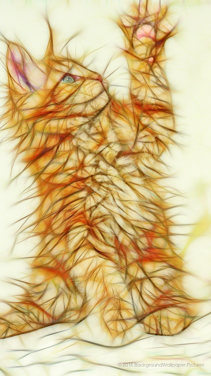 Wallpaper Gratis Lucu - Marine Invertebrates , HD Wallpaper & Backgrounds
