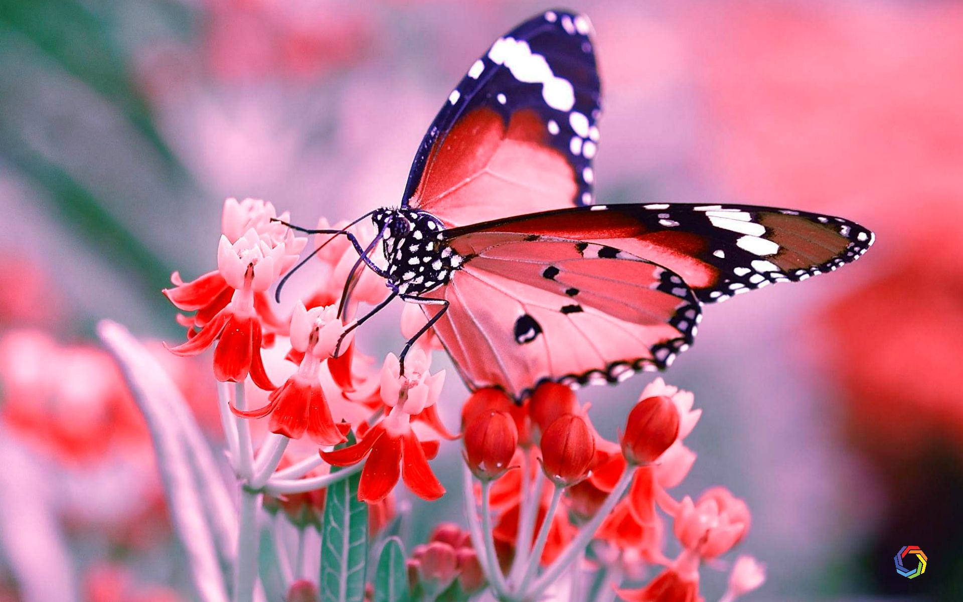 High Definition Butterfly Wallpaper Hd 3290883 Hd Wallpaper Backgrounds Download
