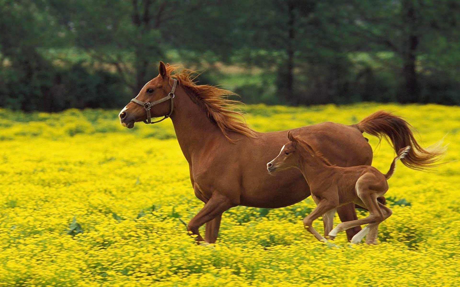 Horse Wallpaper Wid Flowers Mother Horse And Baby Horse 3291737 Hd Wallpaper Backgrounds Download