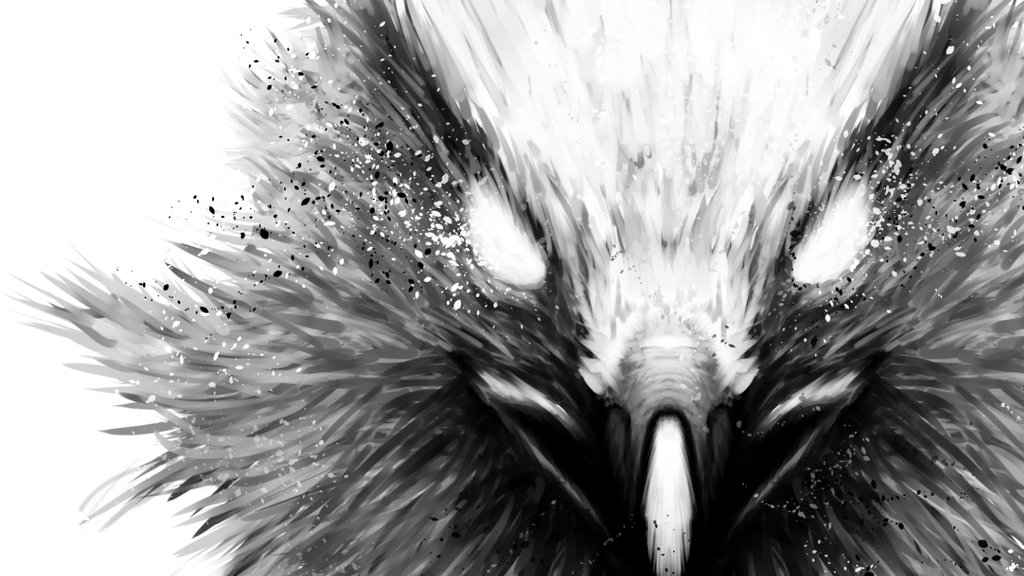 Hawk Wallpapers High Resolution Black And White Hawk 3292070 Hd Wallpaper Backgrounds Download