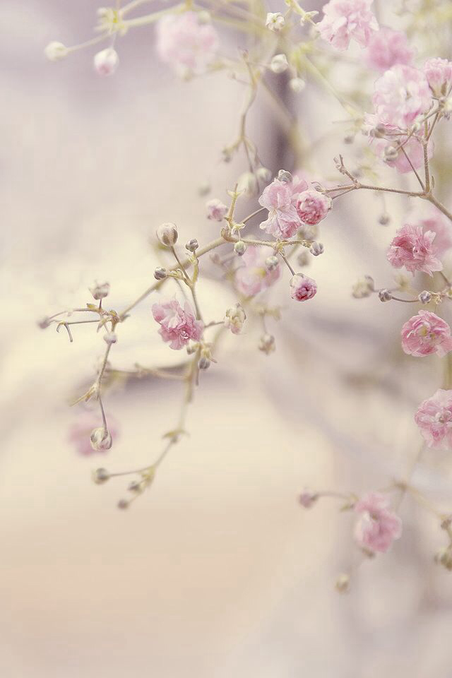 Hd Backgrounds For Phone Page Of Wallpaper Pink Flower - Chat Wallpapers For Iphone , HD Wallpaper & Backgrounds