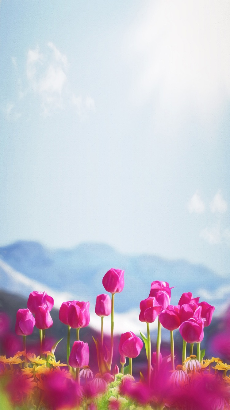 Download Now - Tulip , HD Wallpaper & Backgrounds