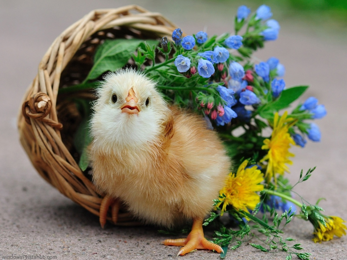Download Cute Birds Wallpaper Hd For Mobile 342660 Hd Wallpaper Backgrounds Download