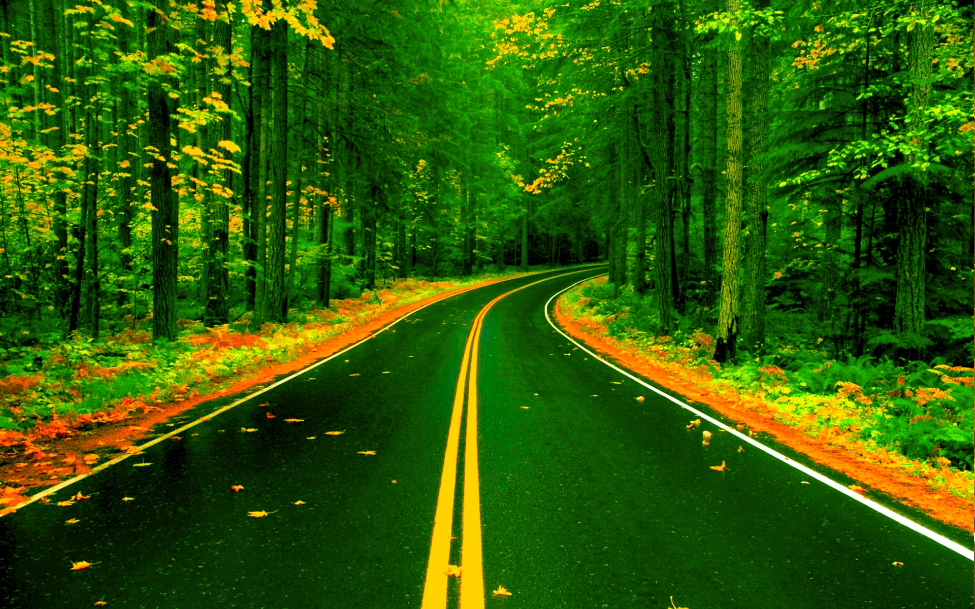 Forest Road Wallpaper Background Images Road Nature 348283 Hd Wallpaper Backgrounds Download