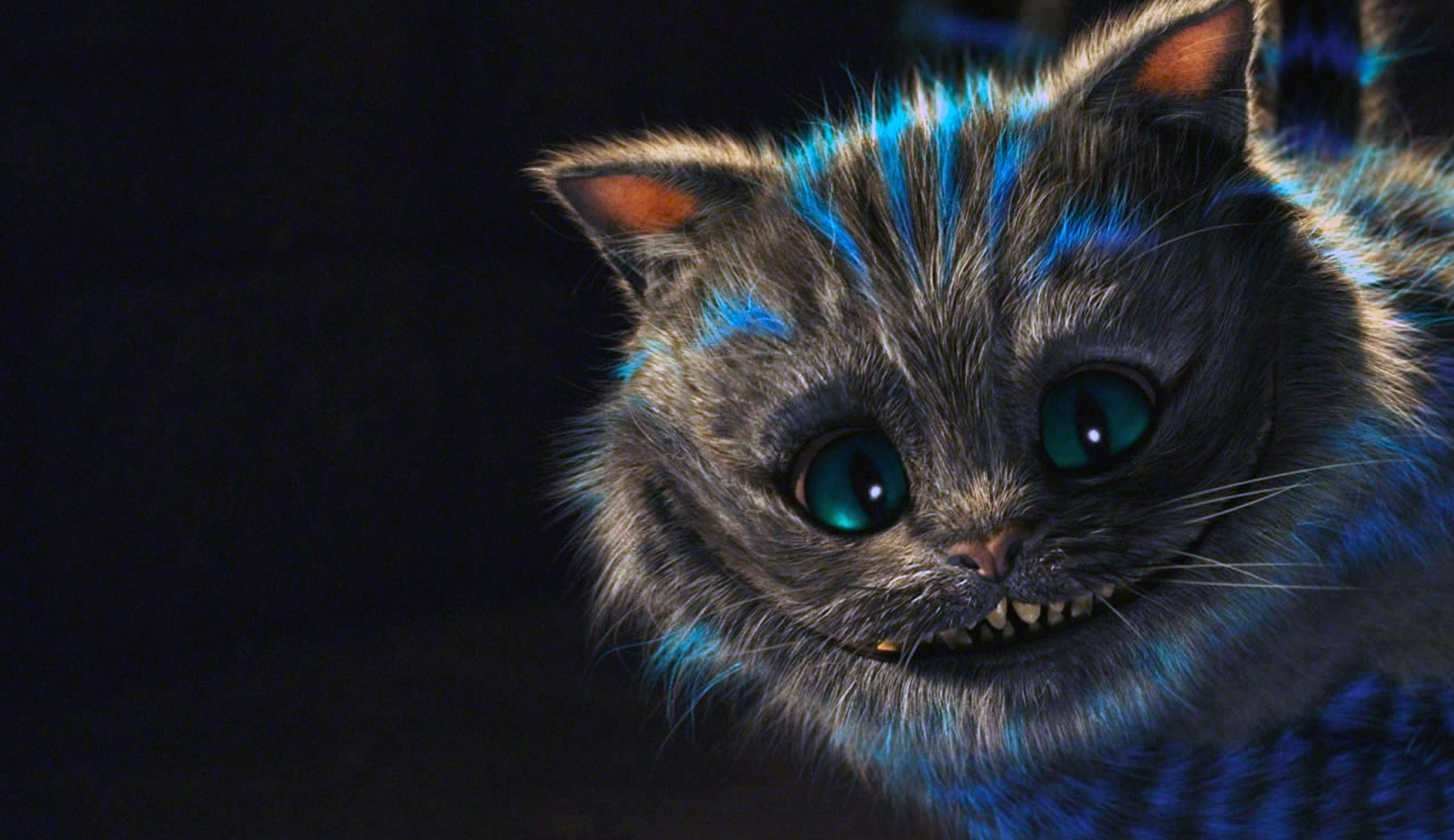 Cheshire Cat Wallpaper Tumblr Cats Wallpaper For Laptop 355012 Hd Wallpaper Backgrounds Download