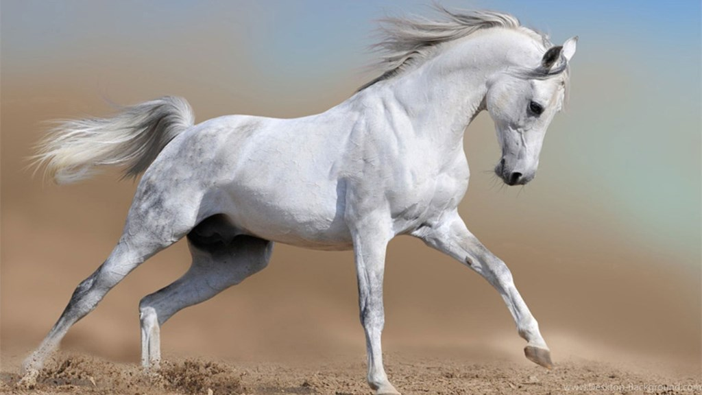 White Horse Wallpapers High Resolution Hd Desktop Background