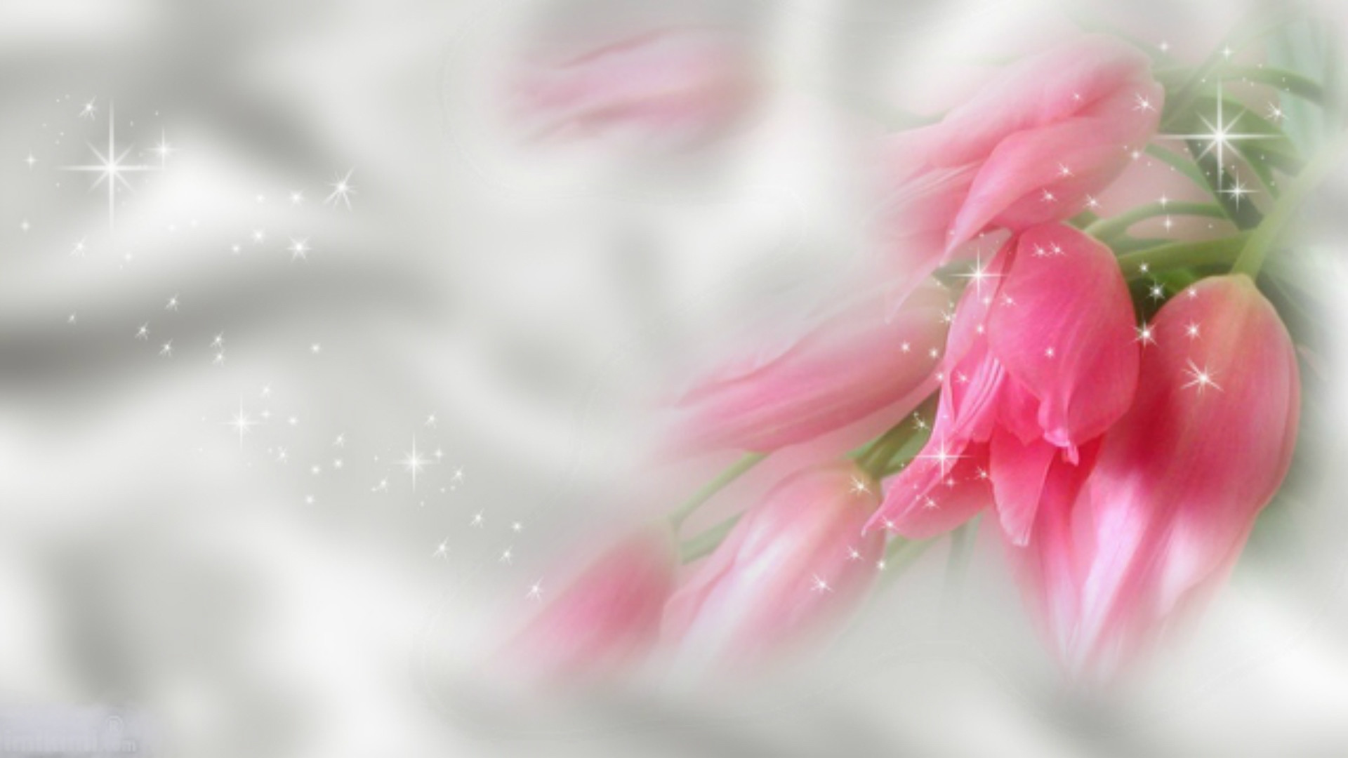 Full Hd P Flowers Wallpapers, Desktop Backgrounds Hd, - Desktop Wallpaper For Flower , HD Wallpaper & Backgrounds