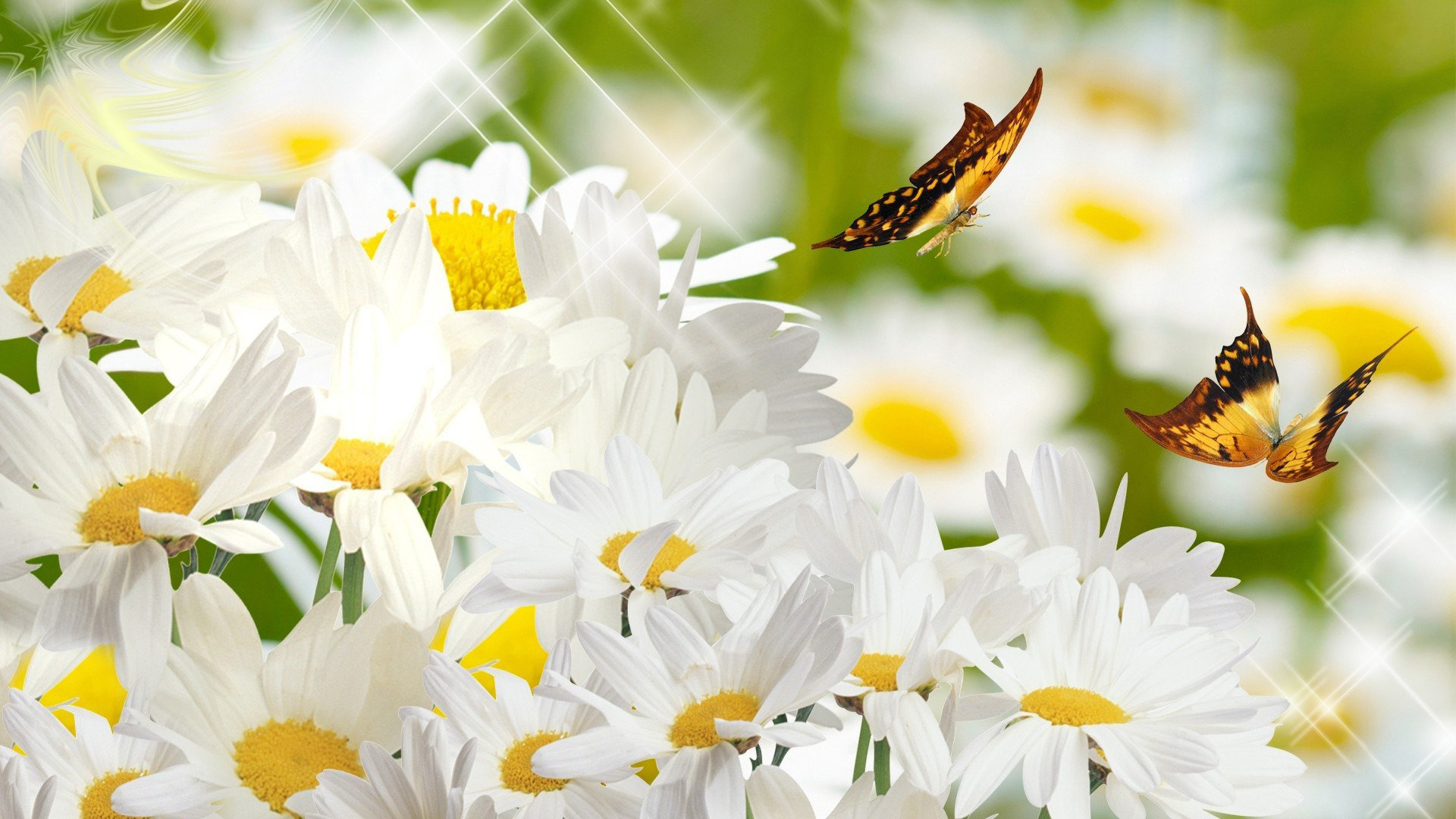 Free Cool Flower High Quality Wallpaper Id - Daisy And Butterfly , HD Wallpaper & Backgrounds