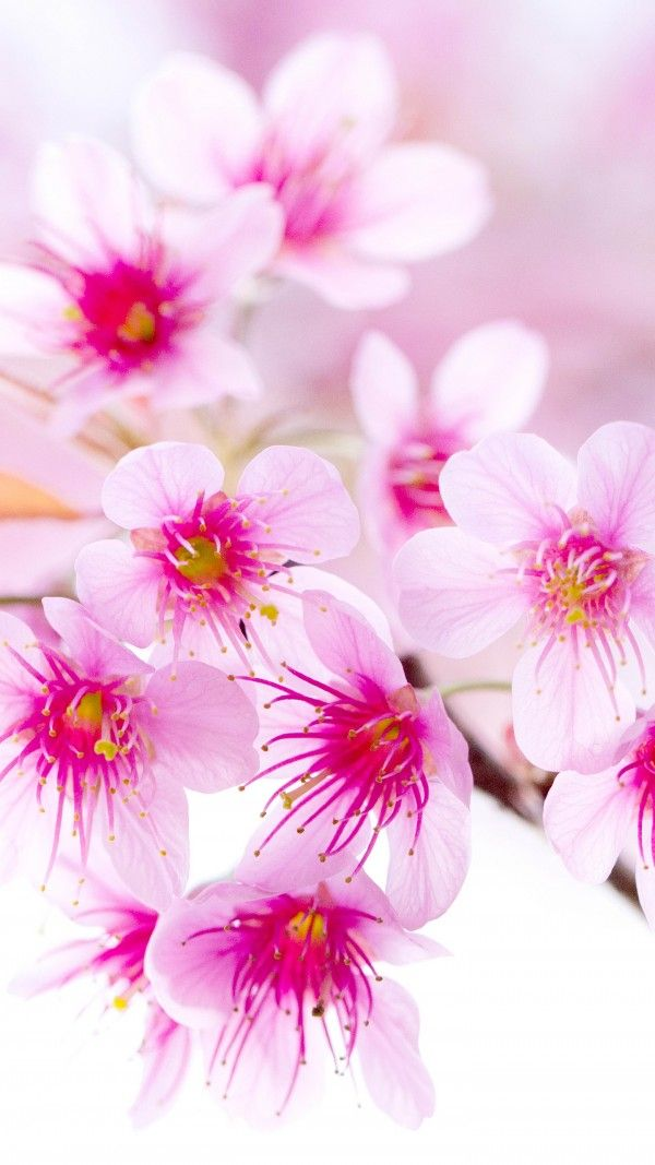 Hd Wallpapers For Full Hd Flower Wallpaper Mobile 357808