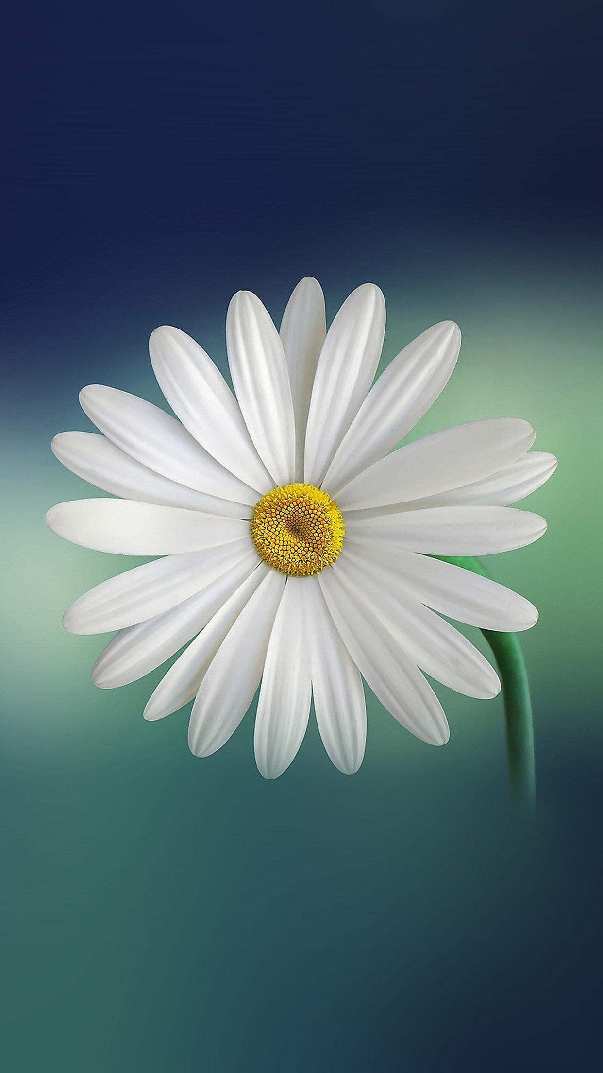 Iphone 7 Wallpaper Hd Flower 357838 Hd Wallpaper