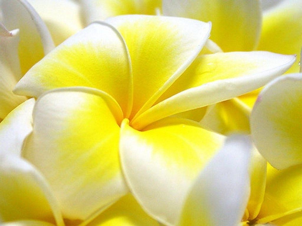 Download Wallpaper - New Flowers Wallpapers Desktop , HD Wallpaper & Backgrounds