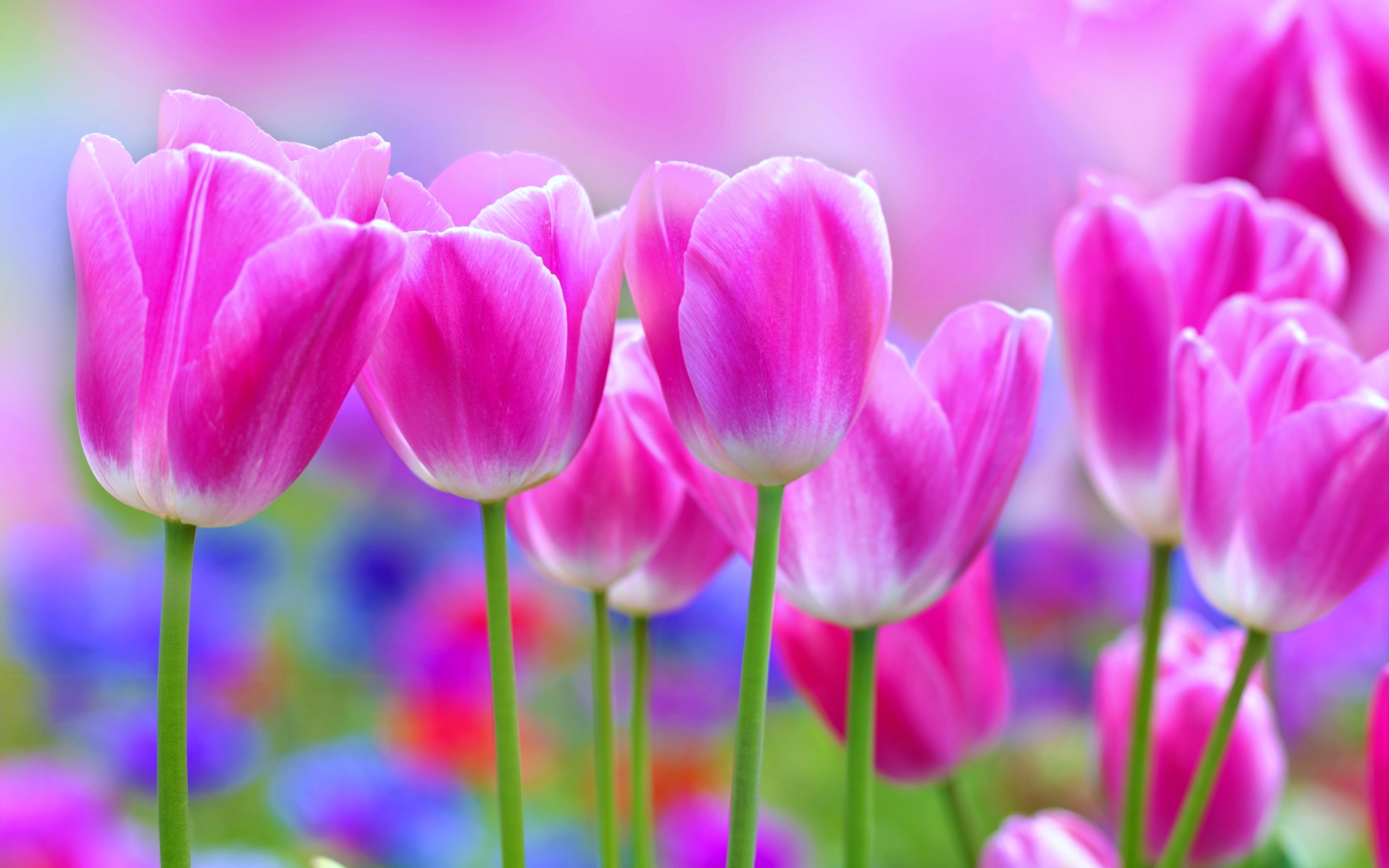 Amazing Flowers Wallpapers , Pictures - Good Morning Best Hd , HD Wallpaper & Backgrounds